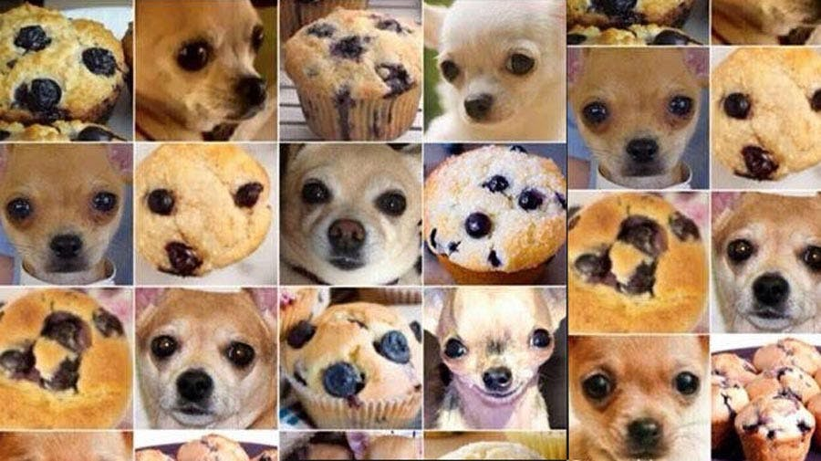 Can your classifier tell the difference between a chihuahau and blueberry muffin?